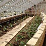 Die Hochbeete wurden nach historischen Vorlagen bepflanzt.