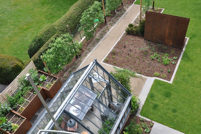 Ein Hidcote in einem modern angelegten kleinen Garten.