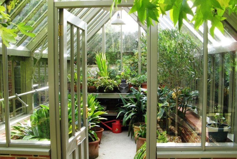 Die Kübelpflanzen ziehen ins Gewächshaus ein.