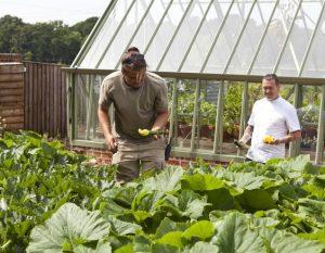Gärtner & Koch ernten Gemüse.