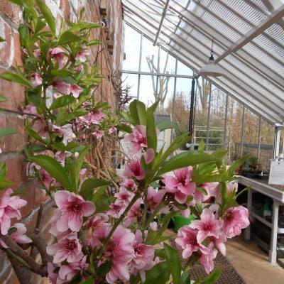 Pflanze lieber ungewöhnlich – Exoten im Gewächshaus