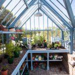 Pflanztisch und Regale Ton in Ton mit dem Gewächshaus - hier Chalkhill Blue.
