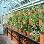 Mallery Display Bank bietet viel Platz für Ihre Pflanzen.