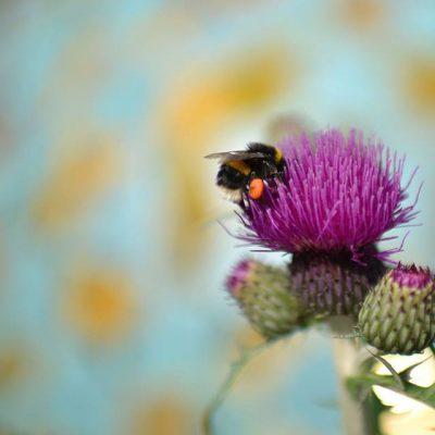 7 Tipps, die Insekten gut tun – im Gewächshaus und im Garten