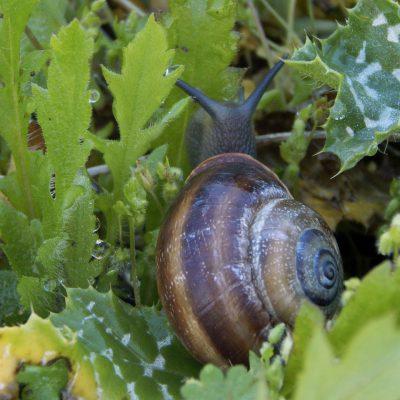 Homöopathischer Tipp gegen Schnecken im Garten