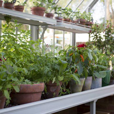 Frühe Früchtchen – Wie Erdbeeren im Gewächshaus gedeihen