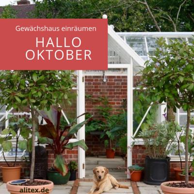 Hallo Oktober – Gewächshaus einräumen