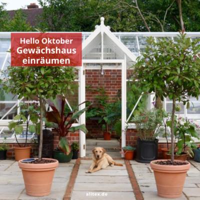 Hello Oktober – Gewächshaus einräumen